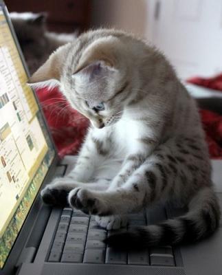 Kittin sitting on laptio keyboard.